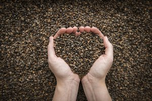 Hands Holding Seeds in Heart Shape