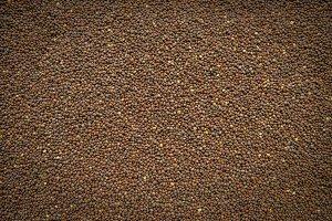 Reddish Seeds