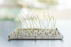 Water Drops on Growing Seedlings