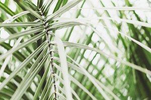 Tropical Palm Leaves Portrait