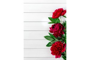 Beautiful pink red marsala peony flowers on white rustic wooden table with copy space for your text top view and flat lay style.