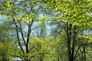 City green park in Riga in the spring