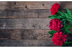 Beautiful pink red marsala peony flowers on rustic wooden table with copy space for your text top view and flat lay style.