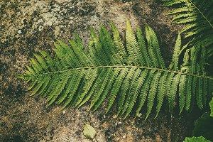 Fern leaf on the stone