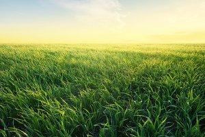 Agricultural landscape at the summer time