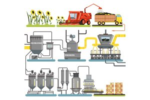 Sunflower oil production process stages, harvesting sunflowers and packing of finished products vector Illustrations