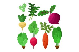 Vitaminic Vegetable Collection Color Vector Poster