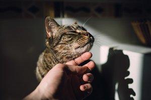 Human hand stroking a cat