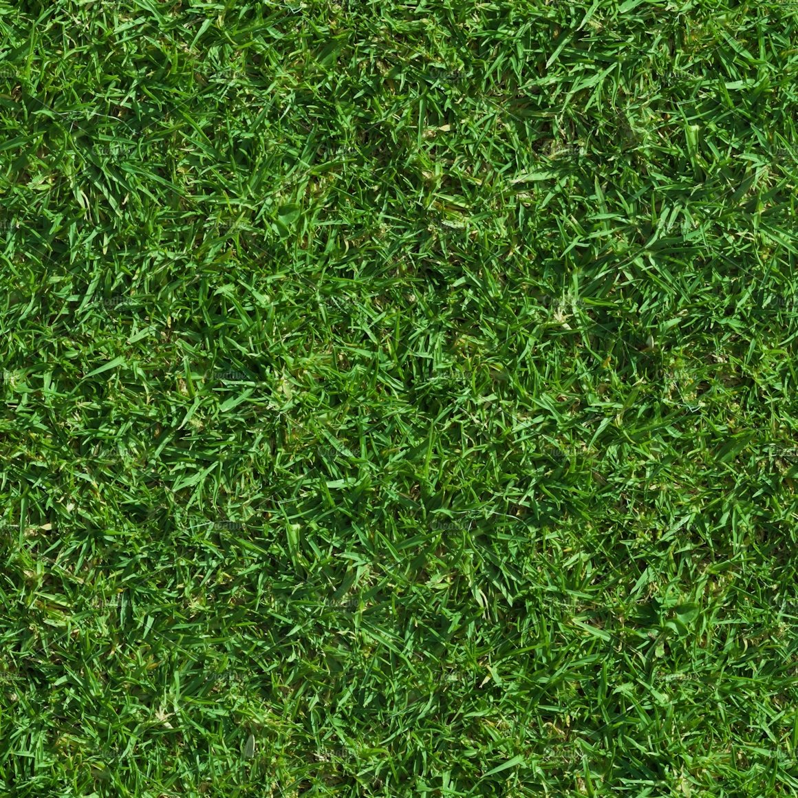 Lush Seamless Grass Texture Textures Creative Market
