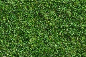 Lush Seamless Grass Texture