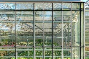 Greenhouse growing bulbs