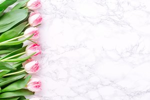 Row of pink tulips on white marble