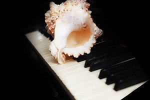 White seashell on piano keys
