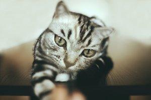 HEY JUDE STOCK   Magnifying Cat_004