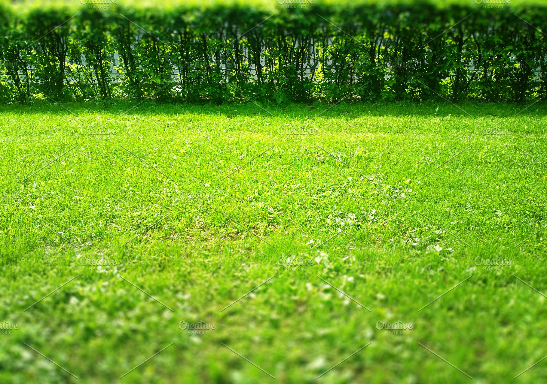 Green Summer Grass With Bushes Bokeh Background High Quality