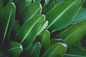 Large Tropical Leaves Closeup