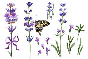 Violet fragrant lavender PNG set