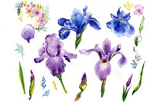 Wildflower сolorful iris PNG set
