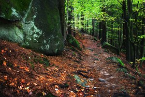 Mountain Forest Trail in Poland