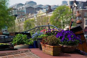 Flowers on a boat, Amsterdam
