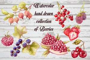 Watercolor berries vectorized