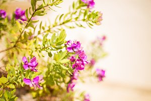 Natural floral background. Purple delicate flowers on a light background. Copy space
