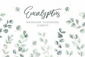 Eucalyptus. Watercolor illustrations