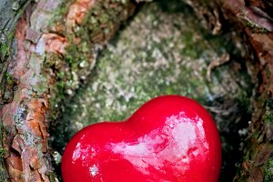 Red heart in a tree hollow