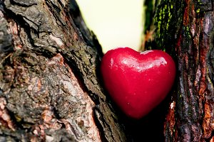 Red heart in a tree trunk
