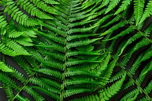 Green fern leaves on black