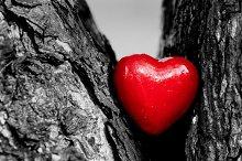Heart in a tree trunk, black & white