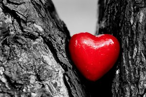 Heart in a tree trunk, black & white
