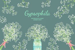 Watercolor Gypsophila Baby's Breath