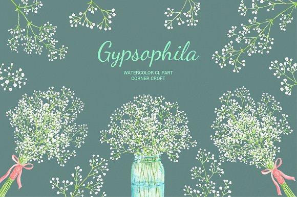 Watercolor Gypsophila Baby's Breath