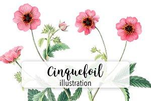 Flowers: Vintage Cinquefoil