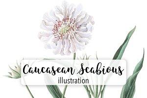 Flowers: Vintage Caucasean Scabious