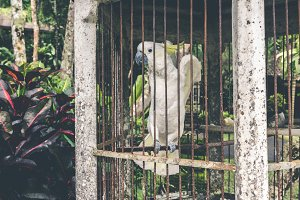 Beautiful white parrot in a cage.