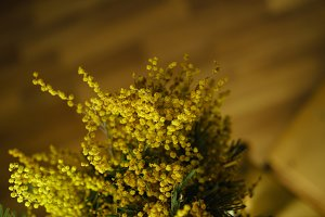 Flower bouquet. Yellow mimosa