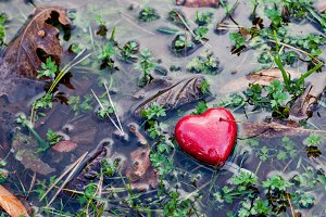 Red heart in water puddle