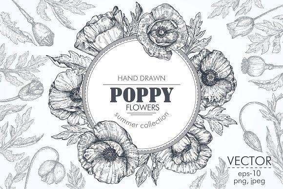 Vector Poppy Flowers Set