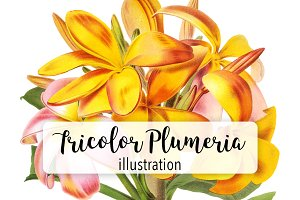 Florals: Vintage Tricolor Plumeria
