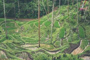 Bali Rice Fields. Bali is known for its beautiful and dramatic rice terraces.