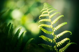 Tropical fern leaves and bokeh