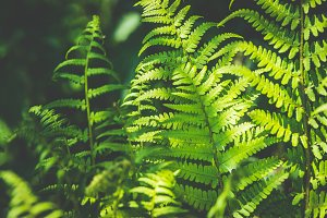 Tropical fern background