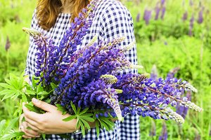 Bouquet of lupines in female hands