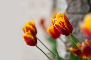 background with colorful tulips