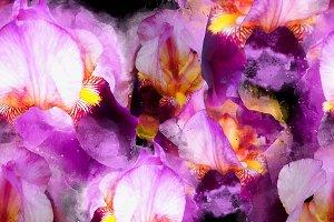 irises flowers seamless | JPEG