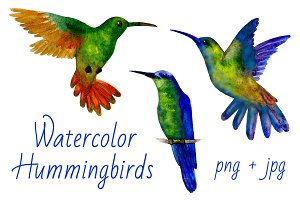 Hummingbirds Watercolor