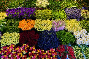 Colorful flowers in a florist's
