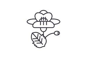 Poppy line icon concept. Poppy flat vector sign, symbol, illustration.